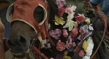 bourouissa-horseday